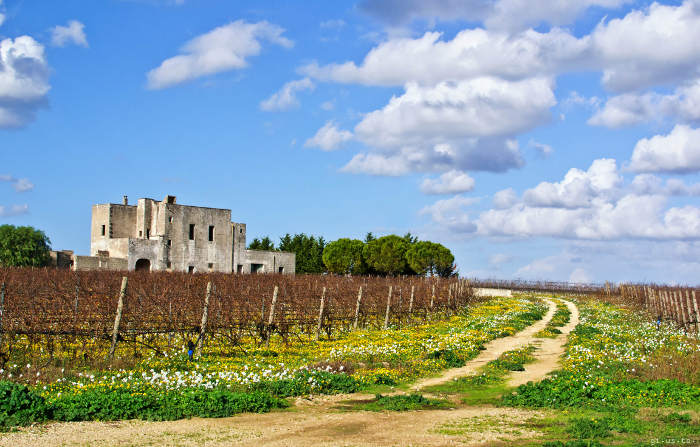 Top 3 half day negroamaro wine tours in Puglia