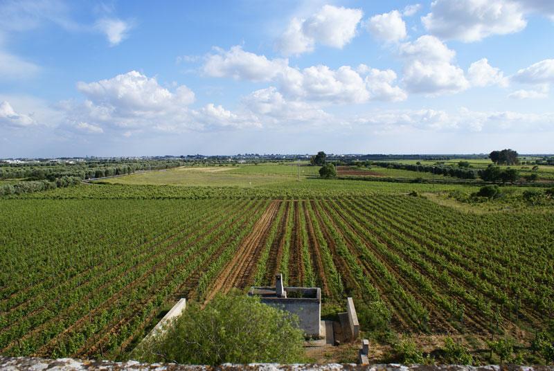 vineyards-salento-puglia-salice-salentino-guagnano