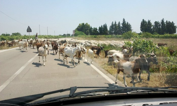 How to avoid the traffic on the Ionian Salento coastal road in summer