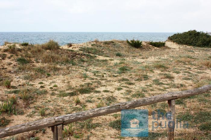 torre-colimena-beach-salento