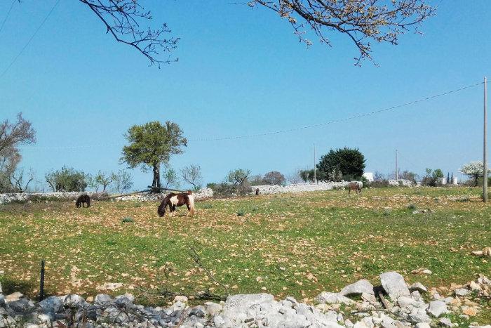 horses-trekking-puglia